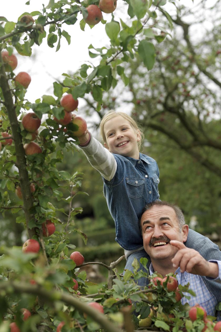 almaszedés álló