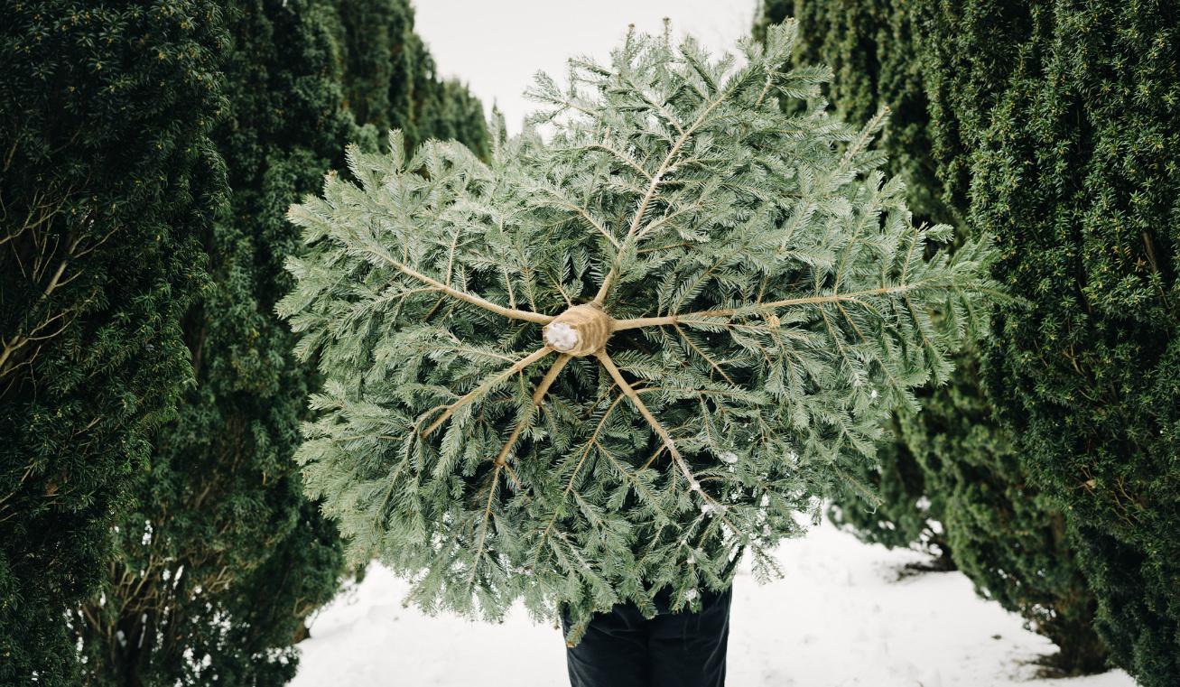 karácsonyfa milyet