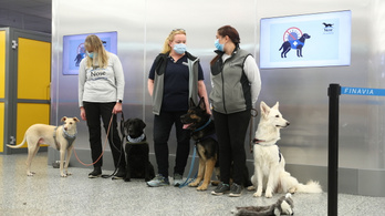 A koronavírus-kereső kutyák gyorsabbak és megbízhatóbbak a teszteknél