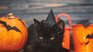 Honnan ered, hogy a fekete macska balszerencsét hoz?