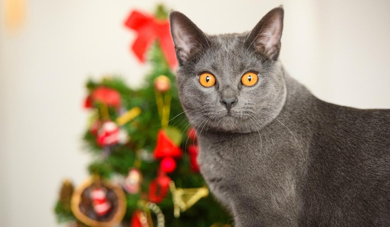 karácsony cicca nyitó