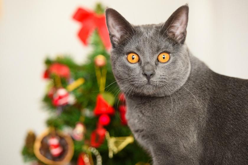 Ezért nem szabad egyedül hagyni a macskát a karácsonyfával: 15 szemléletes kép