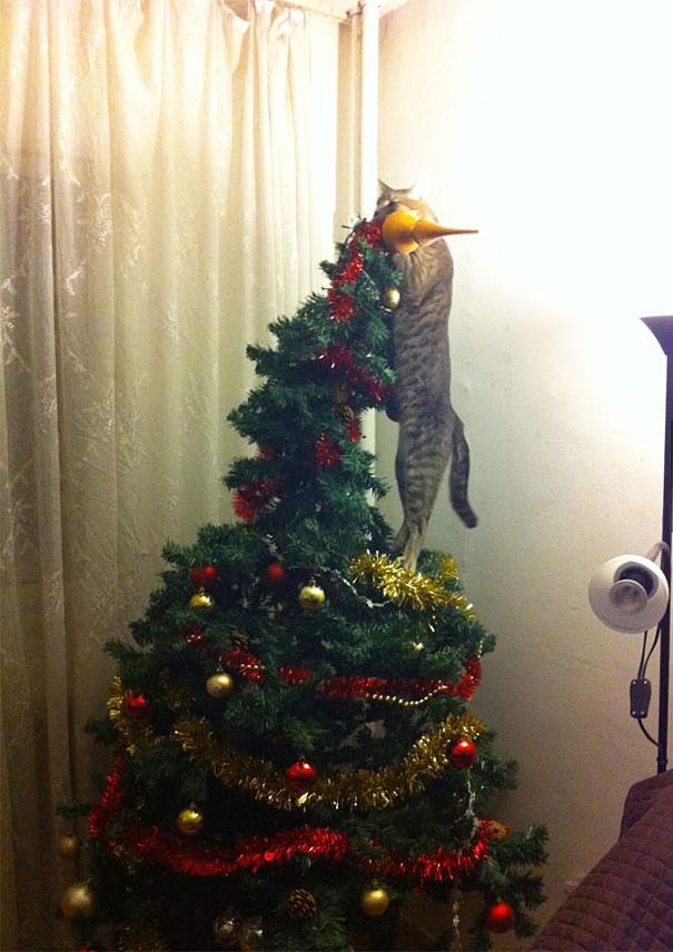 - A macskám segített a karácsonyfa dekorálásában - írta az egyik lelkes cicagazdi.