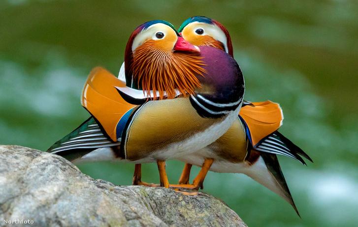 tk3s sn colourful ducks 01