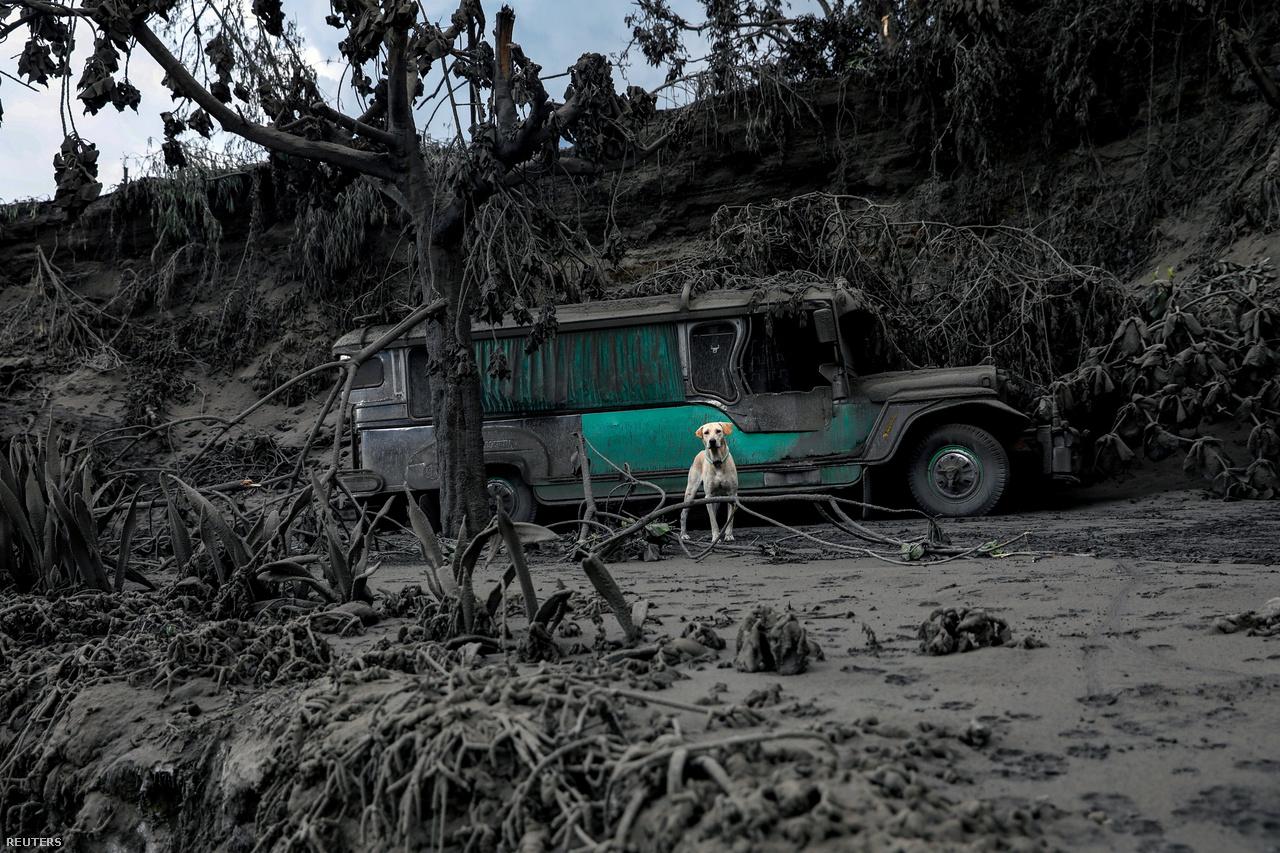 Életkép a Taal vulkán kitörése után a Fülöp-szigeteken 2020. január 13-án.