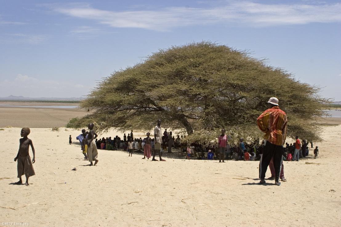 Találkozót tartanak Longech falu lakosai egy fa alatt az észak-kenyai Turkana régióban 2005-ben