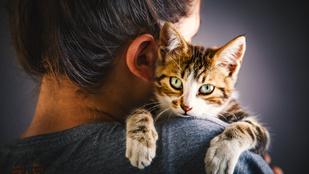 A macskád sokkal jobban kötődik hozzád, mint hinnéd