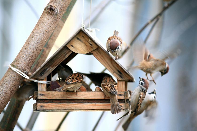 Hogyan tilos, és hogyan ideális etetni a madarakat? A Magyar Madártani Egyesület tanácsai