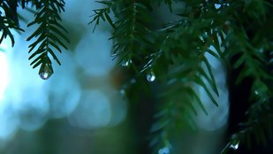 Játék a esőcseppekkel