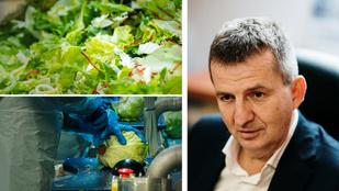 Salátagyárban voltunk vállalati kultúrát tanulni: Gazsi Zoltánnal, az Eisberg ügyvezetőjével beszélgettünk