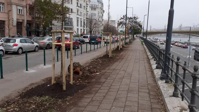 Elkezdték kivágni az Újpesti rakpart beteg fáit