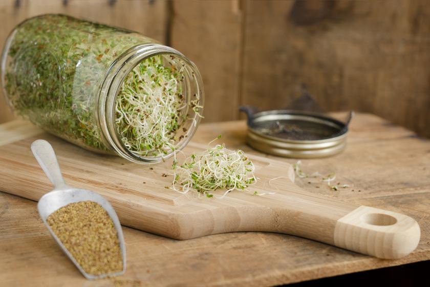 Így csíráztass otthon egyszerűen: friss és egészséges zöldek egész évben, fillérekből