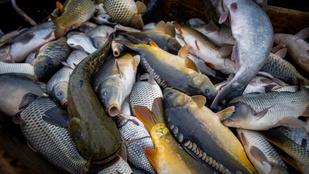 Erre számítson, ha halat enne karácsonykor