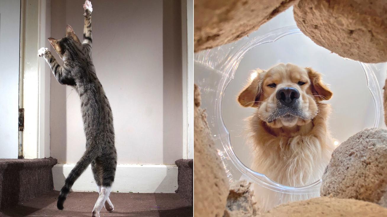 vicces-állatok-borító