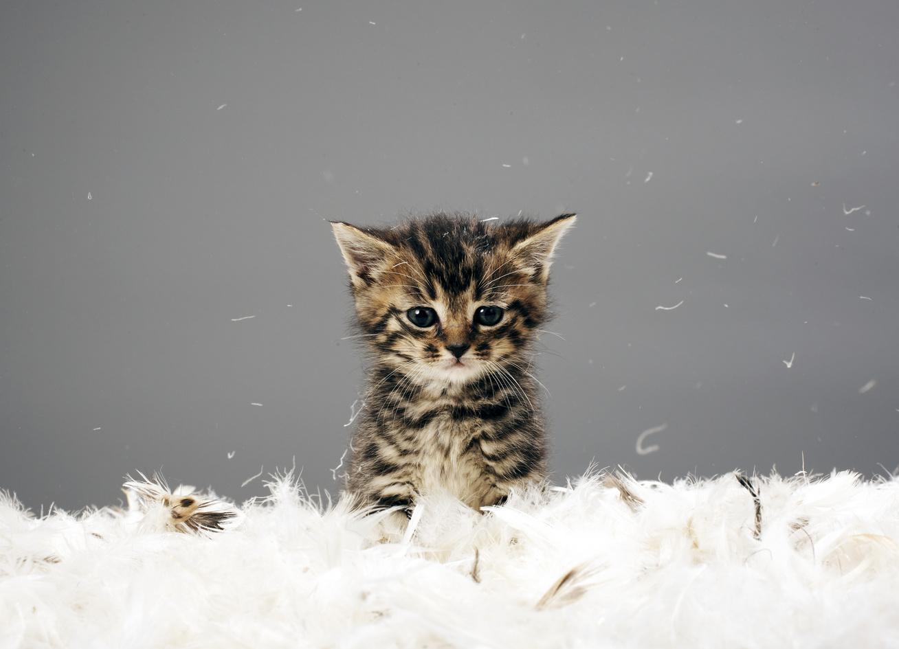 rossz-cicák-borító