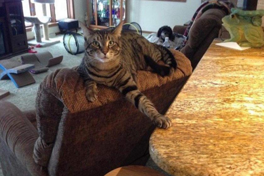 """""""Folyton rászólok a macskámra, hogy menjen le a pultról, de azért még gúnyolódik rajtam."""""""