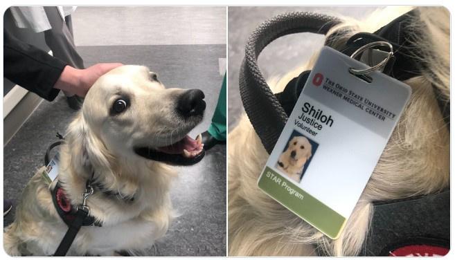 Shiloh a betegfogadó kutya, sokak kedvence