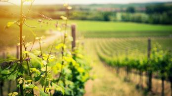 A tokaji bor védett termék lesz Kínában