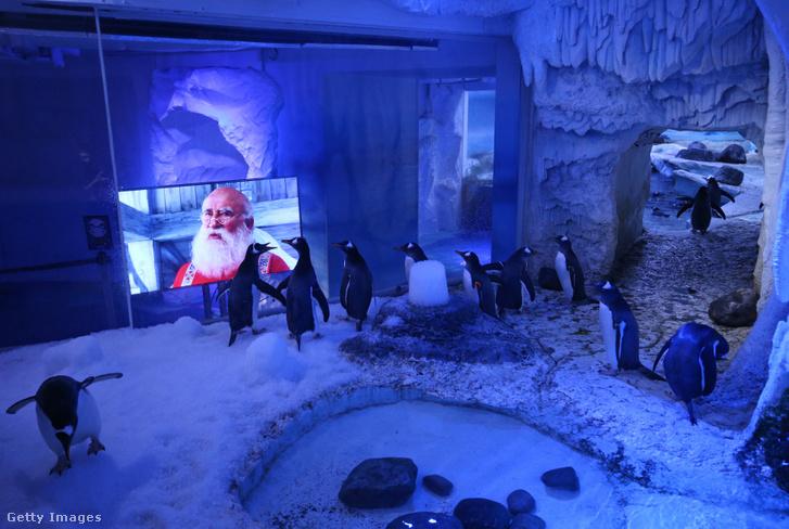 Tévéző pingvinek