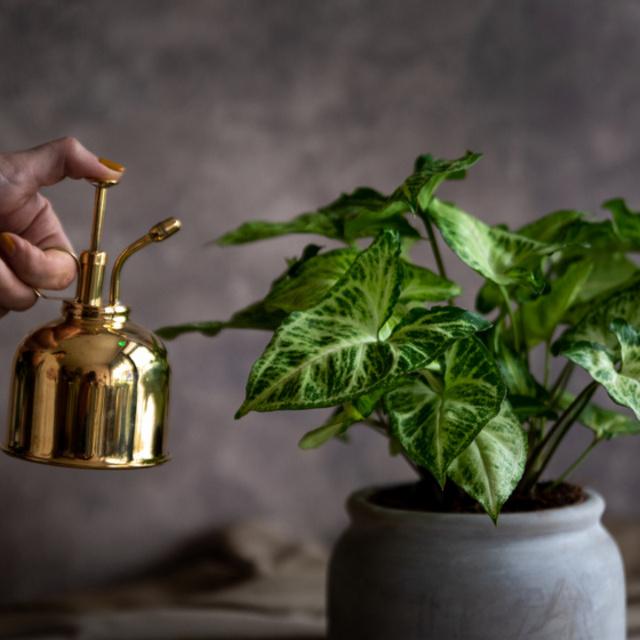 8 gyönyörű szobanövény sötét lakásba: akkor is zöldell, ha alig kap napot