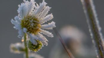 Tarolt a fagy és a jég a mezőgazdaságban