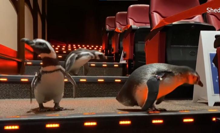 Pingvinek.png