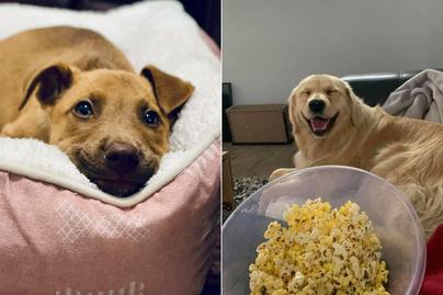 mosolygó-kutyák-borító