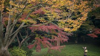 Több mint egy fokkal melegebb volt az átlagnál az idei ősz