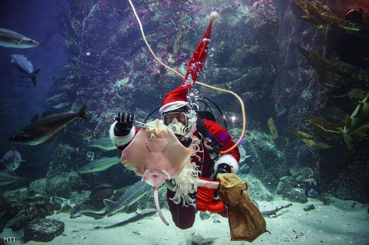 Timo Kaminski mikulásruhában a víz alatt eteti a halakat 2020 december 4-én.