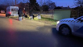 Kutyatámadás Tárnokon: egy kiskutya elpusztult, egy 16 éves lány sokkos állapotban