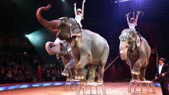 Betiltaná a vadállatok cirkuszi szerepeltetését a Párbeszéd