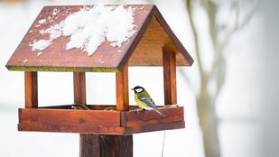 Hova tűntek a madarak, miért üresek az etetők?