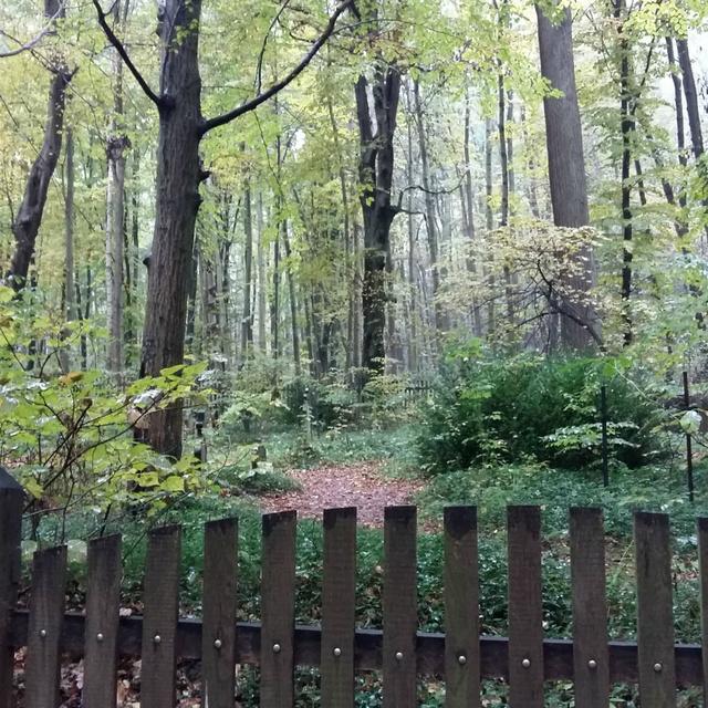 Különös temető rejtőzik a Vértes sűrű erdőjében: több száz éves sírokat rejt a nyugalmas táj