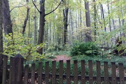 erdei temető nyitókép