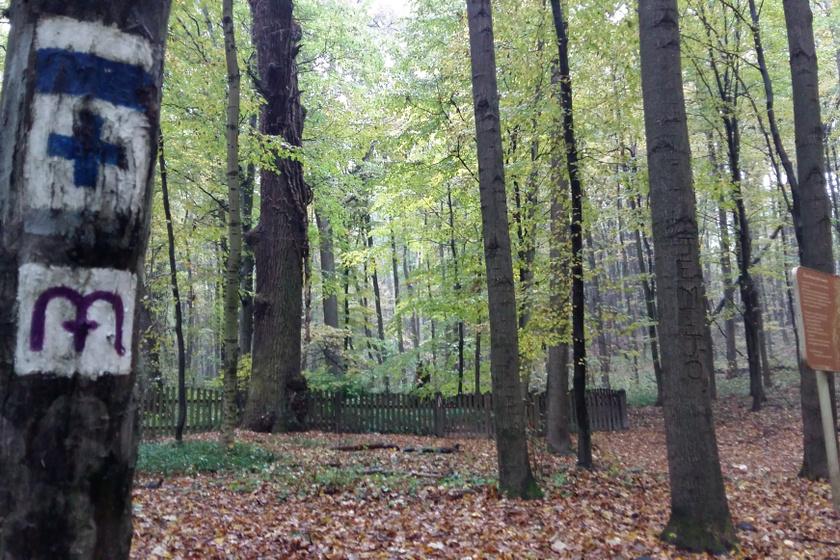 A körtvélyesi erdei temető egy sűrű erdőben található a Vértes-fennsík északi részén, a hozzá legközelebb fekvő község, Szárliget is több kilométerre van. A környékén található Birkacsárdától indul a kék kereszt jelzésű túraútvonal, mely hegyes-völgyes útján megközelíthető a különleges temetkezési hely körülbelül másfél órás gyaloglás után.