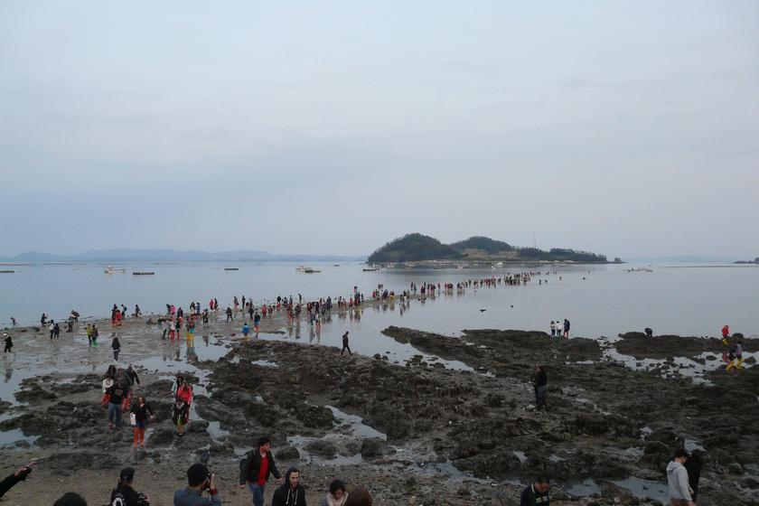 Jindo Miracle Sea Road Festival 100