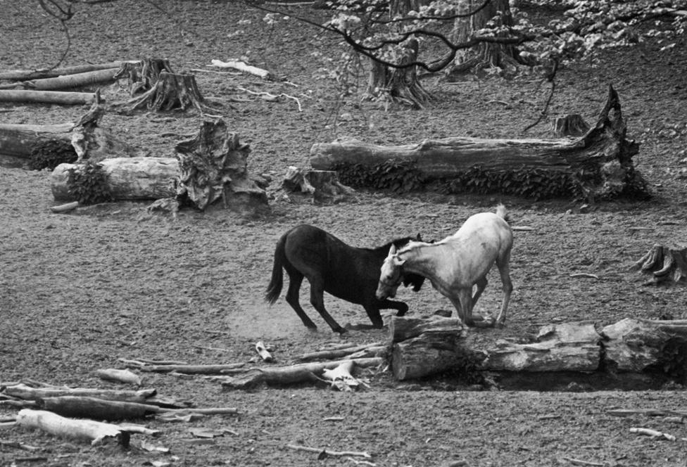 Csikótelep, 1975.
