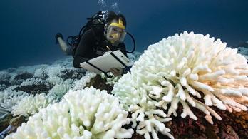 Menthetőek lennének a globális felmelegedés sújtotta korallzátonyok