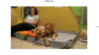A CNN is írt az ELTE kutyákról szóló tanulmányáról