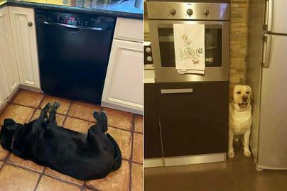 furcsa-kutyák-borító