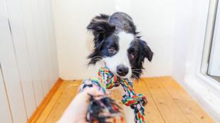 Agresszió vagy játék: te érted, hogy miért morog a kutyád?