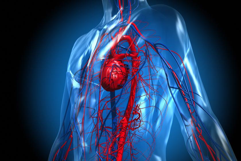 Dohányzás: nem csak a tüdőnek és szívnek méreg