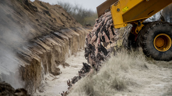 Kikeltek a földből, majd beszennyezték a talajvizet a dániai nyércek
