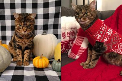 morcos-macska-borító