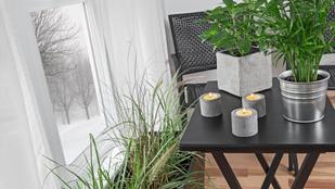 5 tipp, hogy a szobanövényeid túléljék a telet