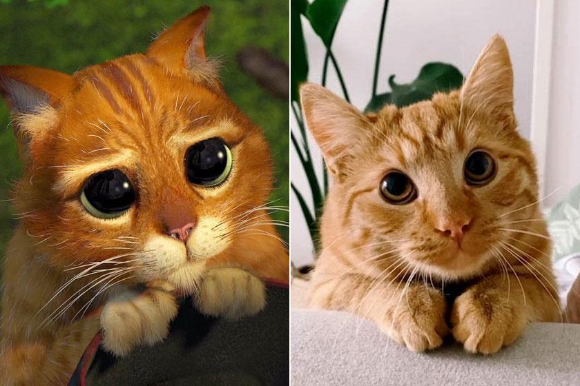 shrek-macska