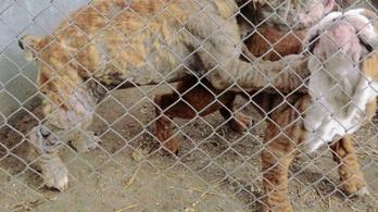 Százhatvanhat kutyát mentettek meg az állatkínzók karmai közül