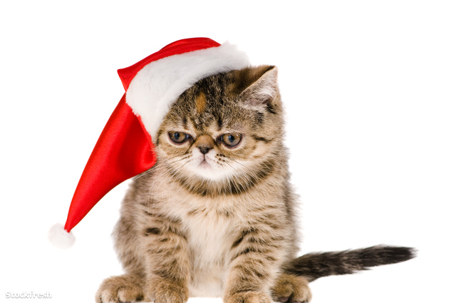 stockfresh 552138 kitten-santa sizeM