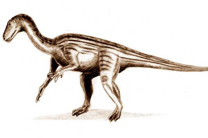 A Thecodontosaurus rajza.