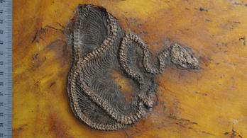 Eddig ismeretlen kígyófaj nyomára bukkantak az őskorra nyíló ablakban